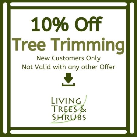 tree trimming coupon deal special offer