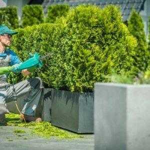 topiary shrub trimming & cone shaping